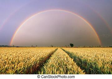 小麥田地, -, 農業