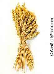 小麥, 橫樑