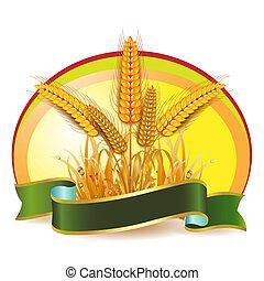 小麥, 耳朵