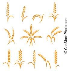 小麦, アイコン, set., 隔離された, シンボル, バックグラウンド。, 農業, 白い米, ∥あるいは∥, 耳