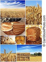 小麦, コラージュ, :, 収穫, bread