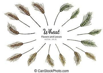 小麦, セット, 図画, illustration., コレクション