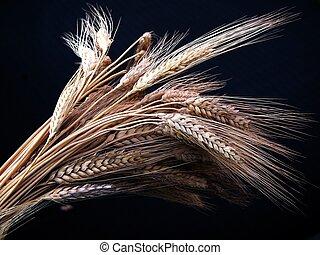 小麦, 中に, 黒, botto