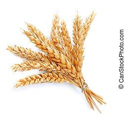 小麦, 束