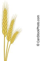 小麦, 耳