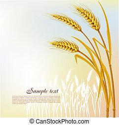 小麦, 背景
