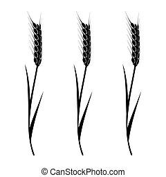 小麦, 要素