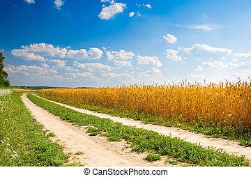 小麦, 黄色のフィールド, 森林, ∥間に∥, 道
