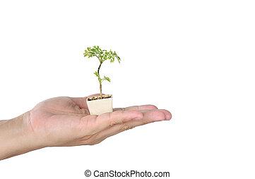 小, 植物罐, 由于, 樹, 在, 人, 手, 安全, 地球