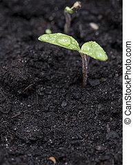 小, 植物, 在, 黑暗, 地球