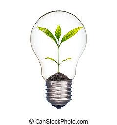 小, 植物, 在, a, 燈泡