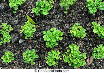 小, 植物, 成長, 上, 黑色的土壤, 圖案, 以及, 結構