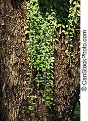 小, 植物, 生長, 上, 樹