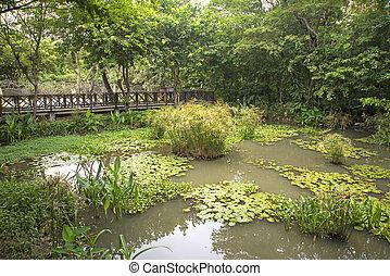 小, 池塘, 在, a, 公園