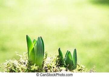 小, 綠色的植物, 射擊, 生長, 在, 自然光