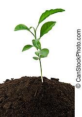小, 綠色的植物