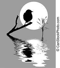 小, 鸟, 在上, 分支, 树, 在中间, 水