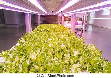 屋内, hydroponic, 野菜, 技術, リードした, ライト, 有機体である, 農場, 成長しなさい
