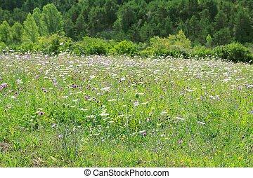 屋外, 牧草地, 自然, 春, フィールド, 花