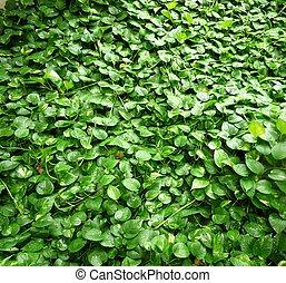 屋外, 緑のプラント