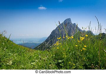 山の ピーク, 花, 牧草地, 夏