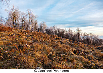 山林伐採, 中に, ルーマニア