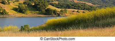山腹, 夏, カリフォルニア, 湖