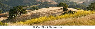 山腹, 春, カリフォルニア
