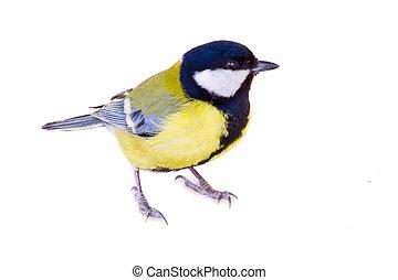 山雀属鸟, 白的鸟, 隔离