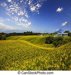 山, はしご, 花, 牧草地