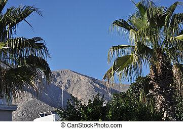山。, やし, 背景, 木