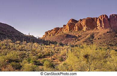 山, アリゾナ, phoenix., アメリカ, 西, 迷信, 風景, 砂漠, 南