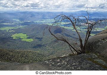 山, オーストラリア, バッファロー