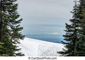 山, 冬, 大きい, 雪, 松, バックグラウンド。, 緑の木, 白, 風景, 森林