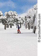 山, 冬, slope., 森林, 白, 楽しむ, スキー, 景色。