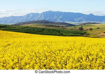 山, 土地, 見落とすこと, 雪, 範囲, 終わらせられた, 農業