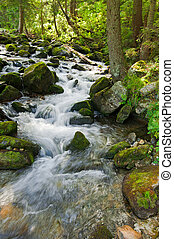 山, 夏, 森林, 流れること, 川の景色