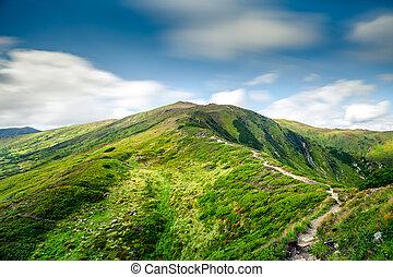 山, 夏, 風景