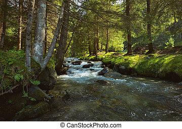 山, 川, 森林