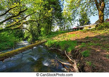 山, 庭, 背中, アメリカ人, グリーン川, rambler, 光景
