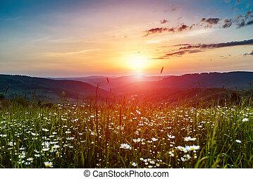 山, 朝, 上昇の 太陽
