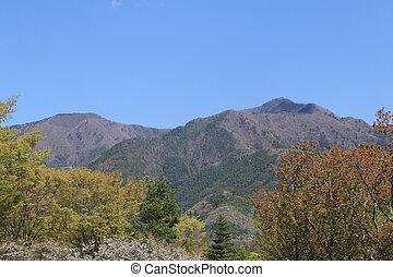 山, 木, 光景