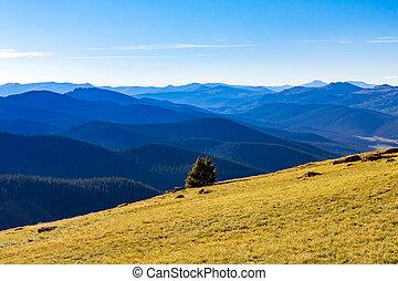 山, 森林, 原野 風景, 在, colorado