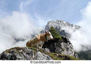 山, 牛, 霧が濃い