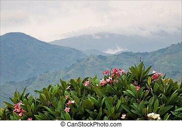 山, ......的, 森林, bwindi.