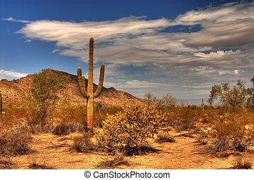 山, 砂漠