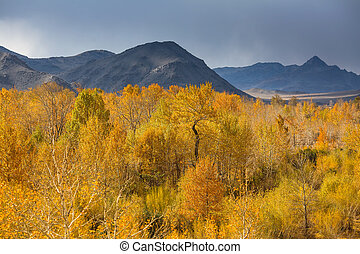山, 秋, 西部, mongolia., 風景, 光景
