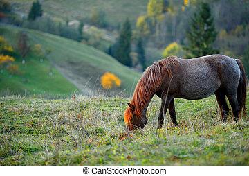 山, 脚立が草を食べる