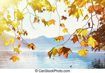 山, 葉, に対して, 秋, スイス, lake.