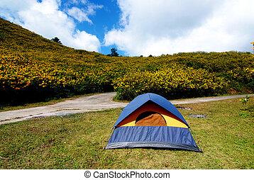 山, 観光客, キャンプ, 木, マリーゴールド, テント